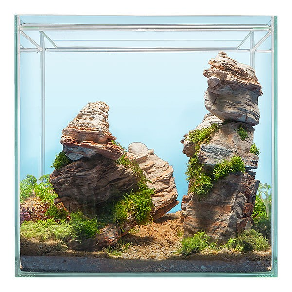 Hardscape Bepflanzung GRAND CANYON