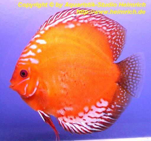 Diskus Marlboro Red - Größe 15cm