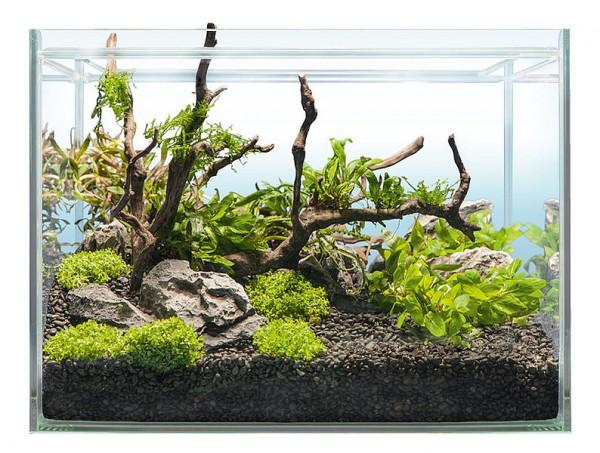 Hardscape Bepflanzung SHRIMP