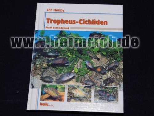 Tropheus - Cichliden